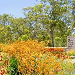 Australian Botanic Garden, Mount Annan