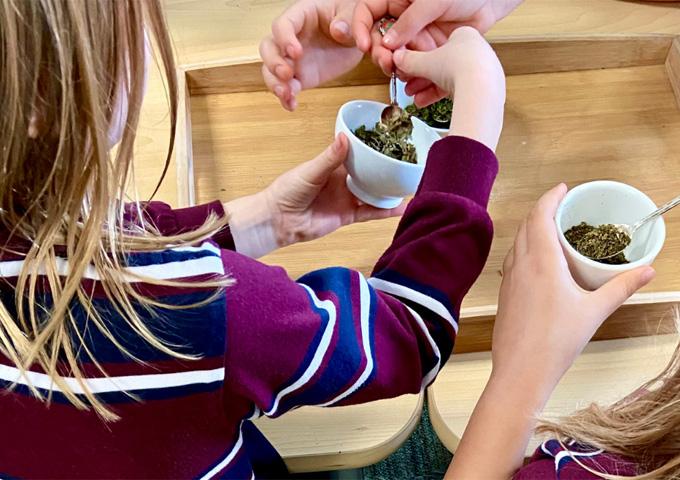 Taste & Explore the Future of Food School Workshops