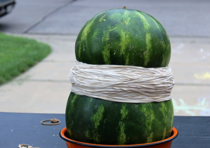 The Big Watermelon Experiment 2